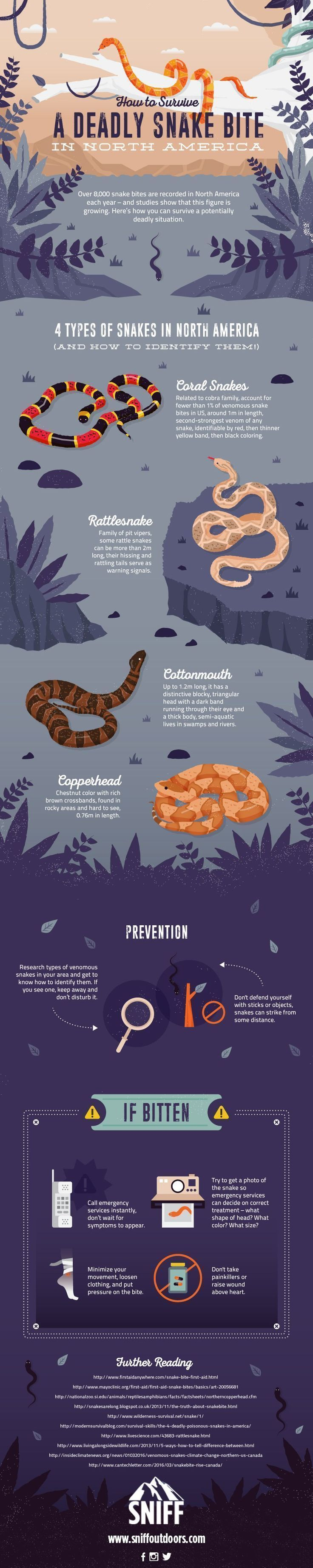 Survive Snake Bites with This Helpful Infographic | How To Identify and What to do if you encounter a Poisonous Snake, check it out at http://survivallife.com/snake-bites-infographic/ #WildernessSurvival