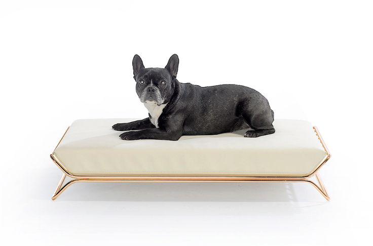 designwelove is a new dog accessories brand from Italy that's making a splash in the pet design world with their super modern beds and feeders!