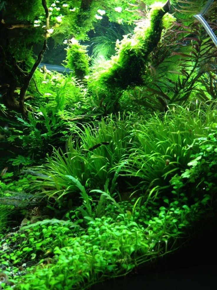 Evasion sauvage par Marmotte75. Un des meilleurs! #aquascaping #aquarium #fishtank