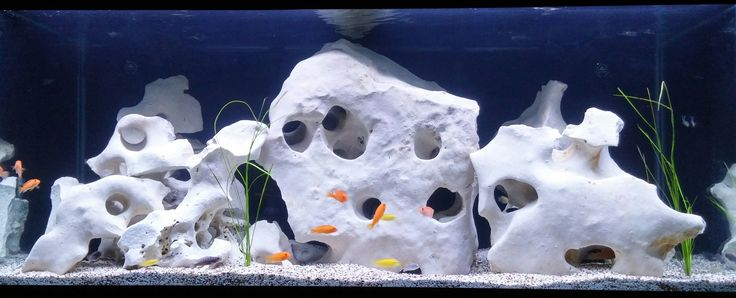 75 gallon mbuna 225lbs texas holey rock from http www for African cichlid rock decoration