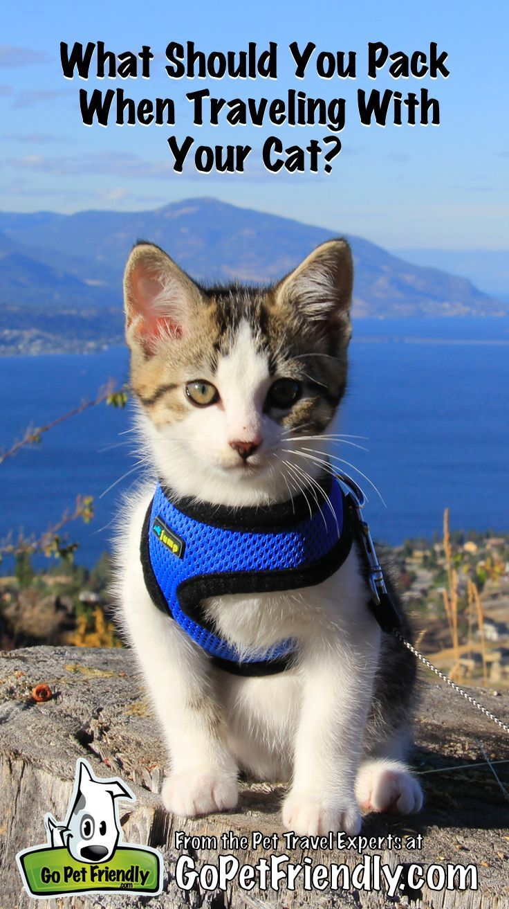 What Should You Pack When Traveling With Your Cat Cat Care Cat Training Pets