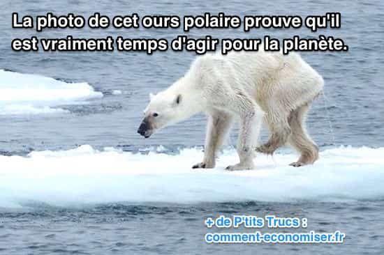 Selon la NASA, la température moyenne de la planète a augmenté de plus de 3°C en un siècle. De plus, le niveau de la mer s'est élevé de 2,5 cm. Mauvaises nouvelles pour la planète et tous les êtres vivants ! Mais particulièrement pour l'ours polaire.  Découvrez l'astuce ici : http://www.comment-economiser.fr/photo-ours-polaire-prouve-qu-il-est-temps-de-reagir.html?utm_content=bufferbf313&utm_medium=social&utm_source=pinterest.com&utm_campaign=buffer