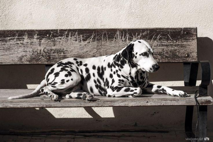 Some people care more about pets than humans, and I completely understand that ;)  Hay quien confía más en los animales que en las personas, y no es de extrañar