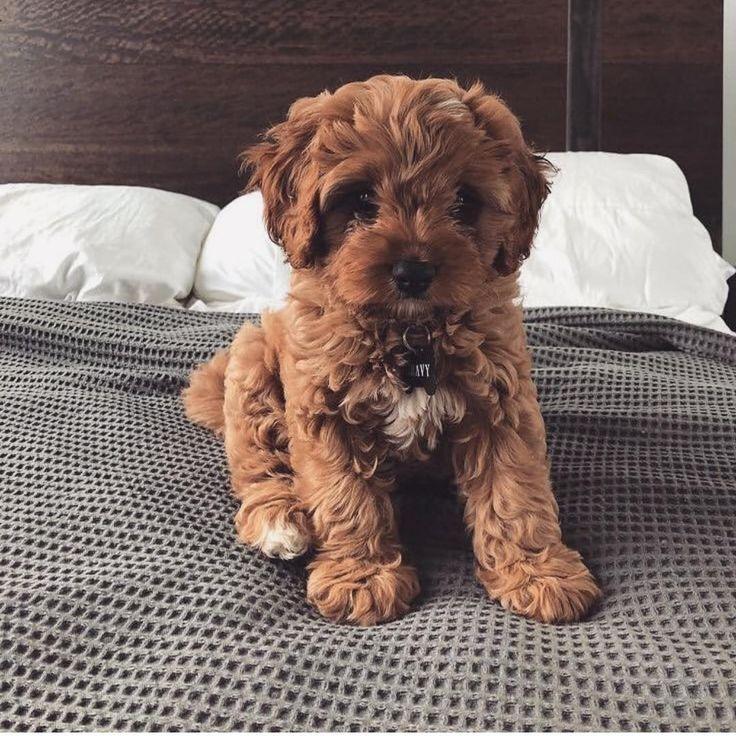 GÜNAYDIN 🎈 Cute dogs breeds