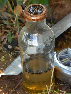 Homemade Fly Traps... It worked! {VW~keeper}   Pinned from http://www.something-like-life.com/?m=1
