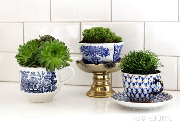 Blue and white tea cup collection with succulents