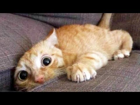 The funniest and most hilarious ANIMAL videos #1 - Funny animal compilation - Watch & laugh! - YouTube