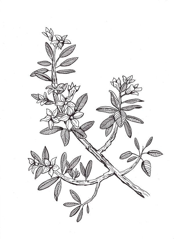 Black & White Illustrations on Behance