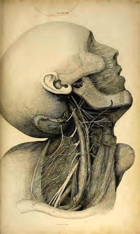 Mejores 503 imágenes de Anatomia ilustrada en Pinterest | Anatomía ...
