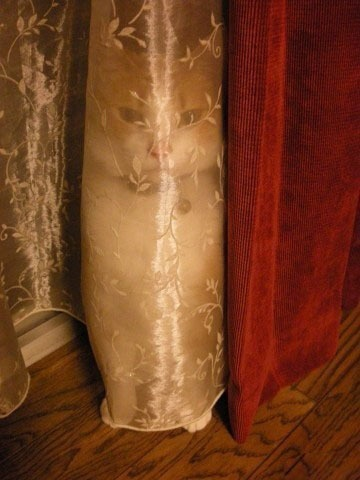 just hiding....Kitty Cat, Funny Pictures, Creepers, Ninjas Cat, Funny Stuff, Humor, Shower Curtains, So Funny, Animal