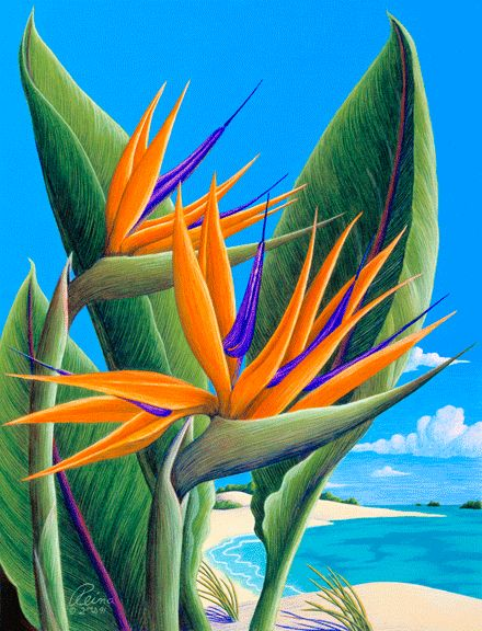 Bird of Paradise Colored Pencil Art by Reina