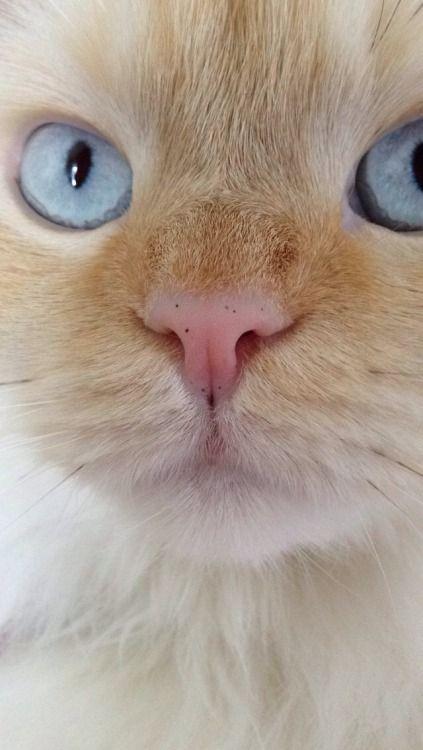 jigglypurr:  no makeup selfie