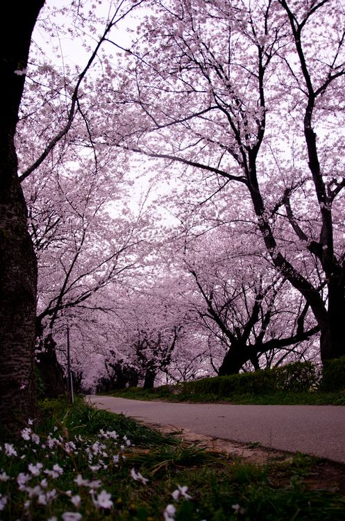 Gongendo, Saitama, Japan