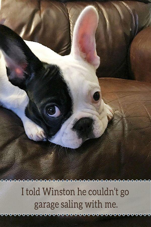 Okc Craigslist Garage Sales Garage Sale Blog About French Bulldog Puppy Cute Dog Photos Puppy Love
