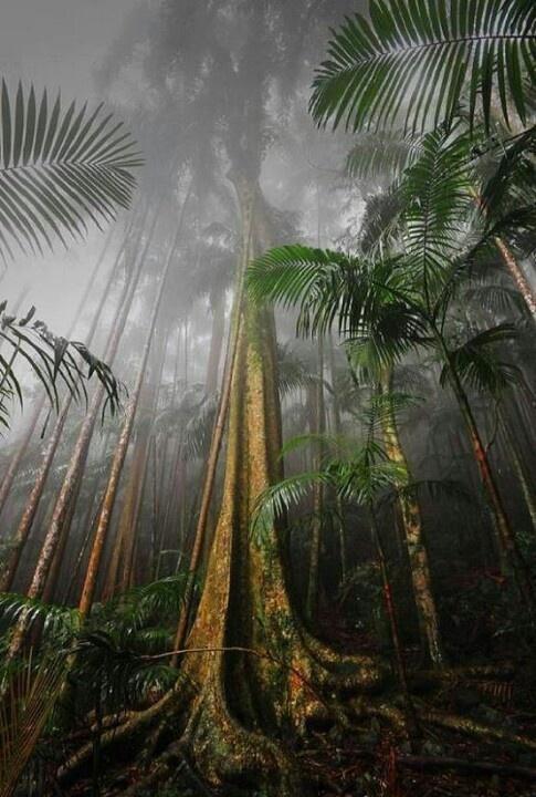 Mount Tambourine rain forrest SE Queensland Australia