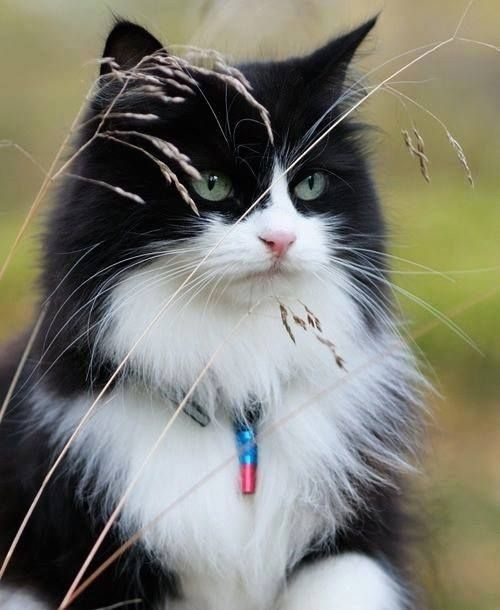 I had an old cat named Migo who looked a little bit like this...