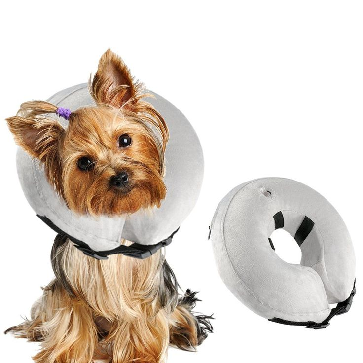 Airsspu Protective Inflatable Dog Collar  Soft Pet Recovery ECollar Cone for Small Medium Large Dogs  Designed to Prevent Pets From Touching Stitches Wounds and Rashes Does Not Block Vision. *** Want to know more, click on the image.-It is an affiliate link to Amazon. #CatHealthSupplies #dogcollar