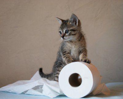 Een kattenmens? Ja, een kattenmens kun je mij wel noemen. In mijn ouderlijk huis hebben we altijd katten gehad en nu ik mijn eigen gezinnetje heb, hoort daar ook zeker een kat bij. Je hoort wel eens dat wanneer er door een jong stel een kat in huis genomen wordt, niet veel later de kinderen zullen volgen. Bij ons klopt dit verhaal als een bus. In juli trok Maurice de Poes bij ons in, niet veel later begonnen mijn moederhormonen op te spelen en in Februari was ik zwanger.