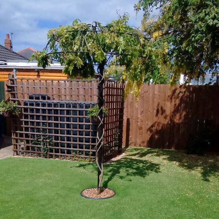 Wisteria Umbrella Plant Support Harrod Horticultural Pergola Garden Wisteria Wisteria Pergola