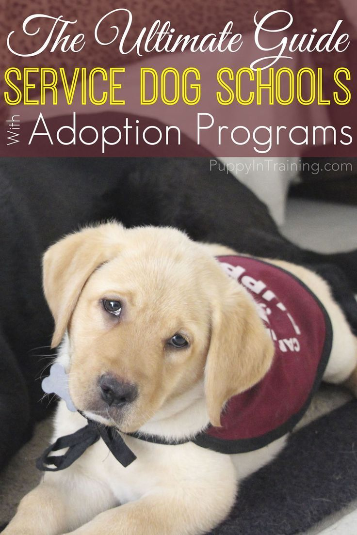 The Ultimate List Service Dog Schools With Adoption Programs