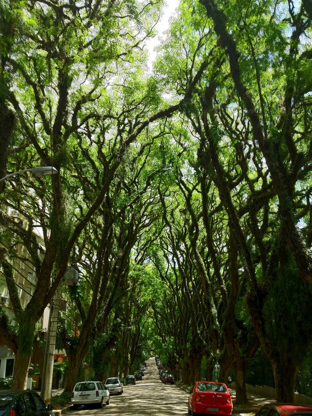 """This tree-lined street, nicknamed """"green tunnel,"""" is located in Porto Alegre, Brazil."""