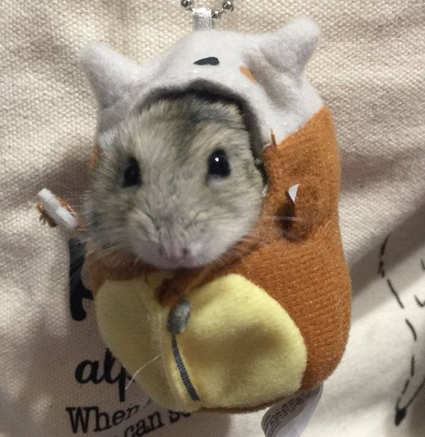 You Can't Handle A Hamster In A Pokemon Plush Sleeping Bag