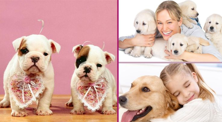 Everyone knows that dogs are man's best friend, even when they can be a little strange at times! But in the end, we just can't help but fall in love with these adorable pooches including all of their quirks and strange habits! Here are fifteen rea...