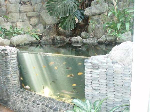 Best 25 outdoor fish ponds ideas on pinterest outdoor for Water garden fish tank