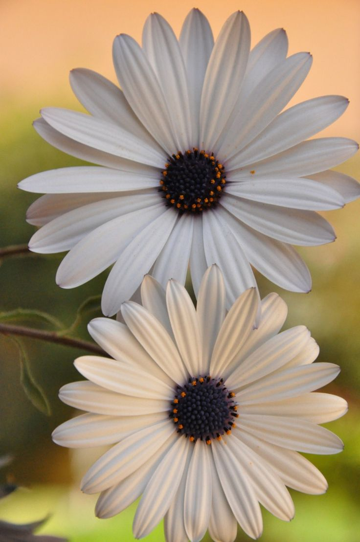 12 best silvies10 most beautiful flowers images on pinterest fulvia afre gannaway is creative nature photographer she says beautiful flowers make us feel good they help us celebrate specia izmirmasajfo