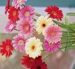 pozdrav květinou