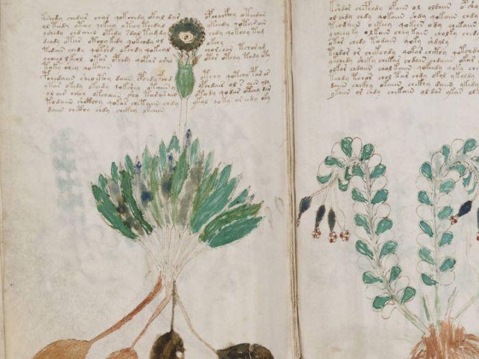 Lo escribieron en un idioma inexistente y muestra plantas que nunca se vieron. Se lo denomina Manuscrito Voynich y podría ser un tratado de botánica o herboristería, al menos en uno de sus capítulos… si no fuera porque las preciosas ilustraciones...