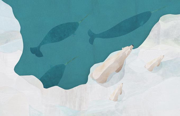 Free Desktop Wallpapers | Jonathan Woodward Studio | Wildlife Art & Illustration