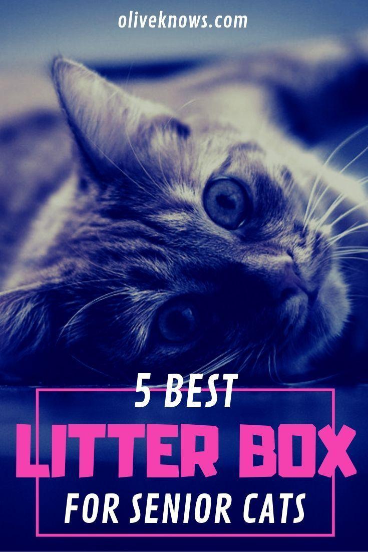 5 Best Litter Boxes For Senior Cats 2019 Guide Best Litter Box Cat Entertainment Cat In Heat