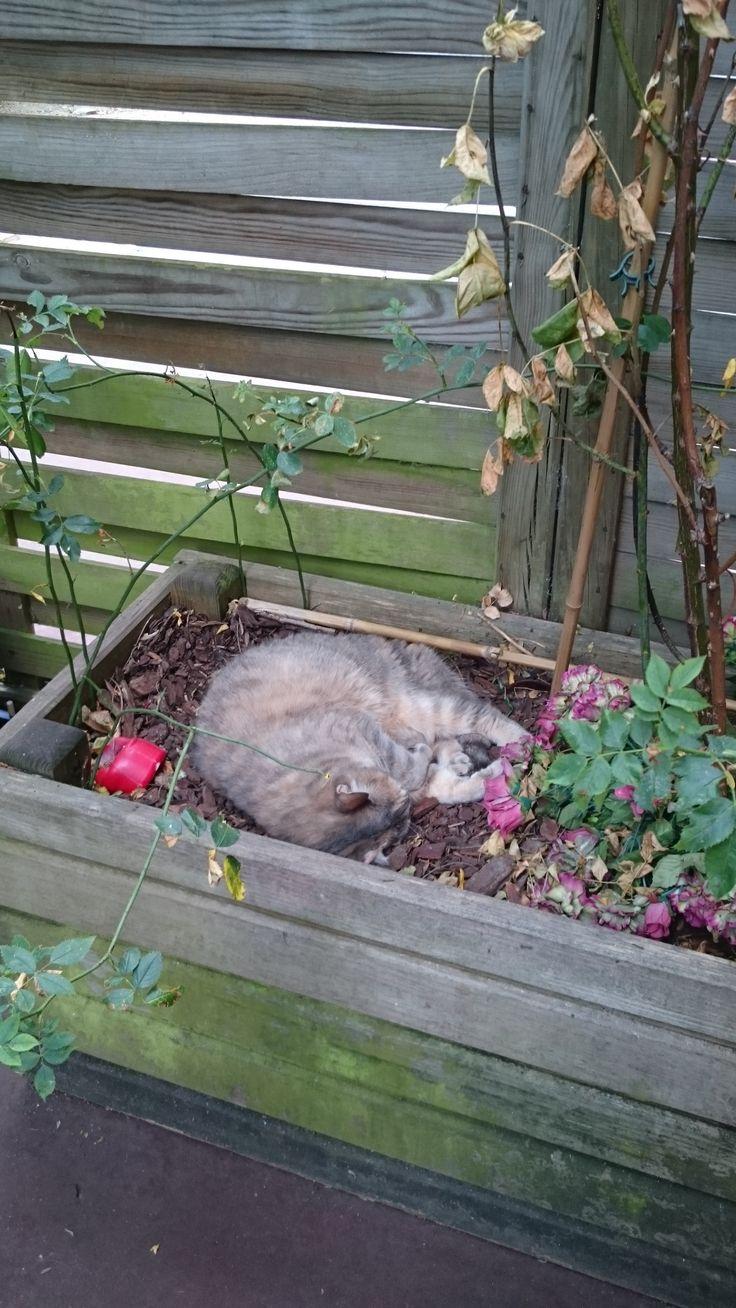 Et voilà Baboune! La copine de Papouille! Elle a eu des grosses misère en début d'année et là voilà maintenant qui récupère bien dans les plantes! Pas mal non?