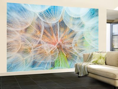 wall murals posters at