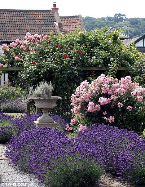 Roses and lavender in bloom in the formal garden at the Old Manor, Devon, UK