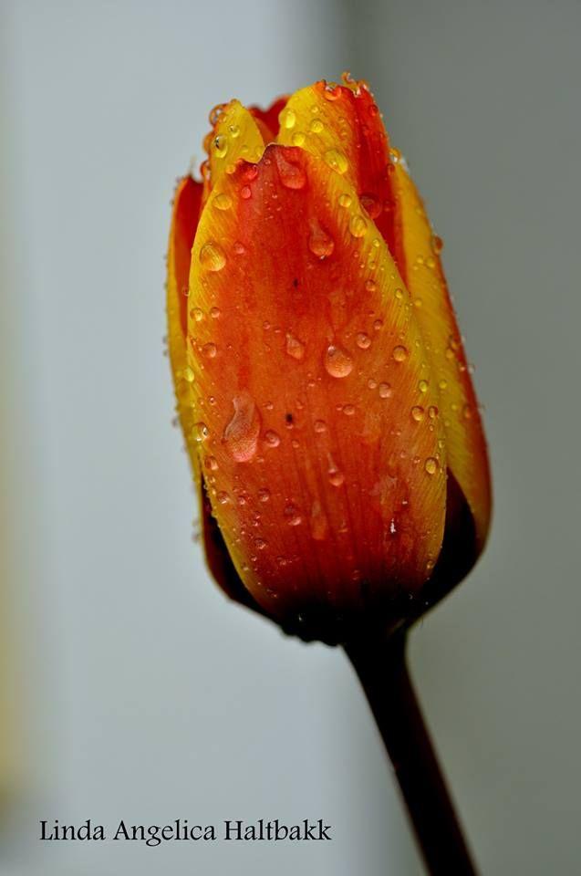 Flowers, macro