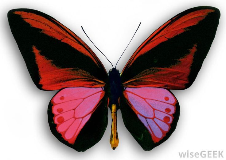 The butterfly effect is a tenet of Chaos Theory that describes how very small actions can have extremely complex effects, such as...