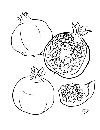 Printable pomegranate coloring page. Free PDF download at http://coloringcafe.com/coloring-pages/pomegranate/