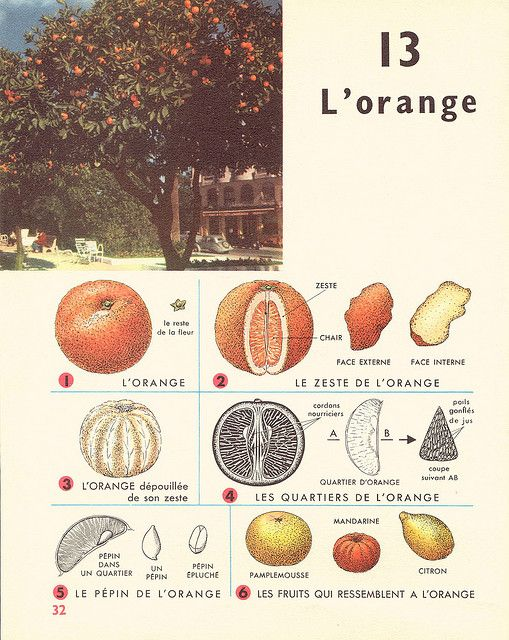 Leçons de choses 1964 : l'orange