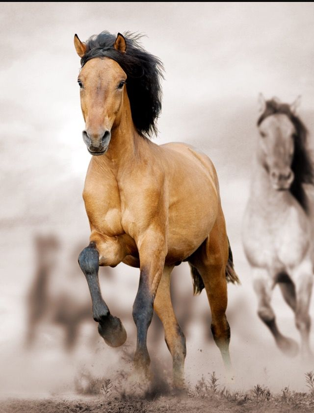 Pin By Heidi Hahn On Horses Horse Background Dslr Background Images Horse Wallpaper