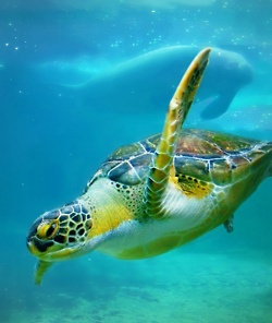 Sea Turtle - they all need us to save the ocean