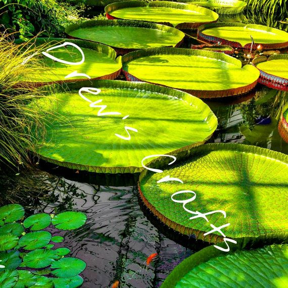 Check out this item in my Etsy shop https://www.etsy.com/uk/listing/257247296/canvas-lily-pads-scotland