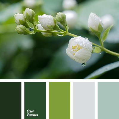Harmonious, ecological and fresh palette. Nature is rich in various shades of green. Mint, light green, emerald, swamp green – an outrageous splendor of nu.
