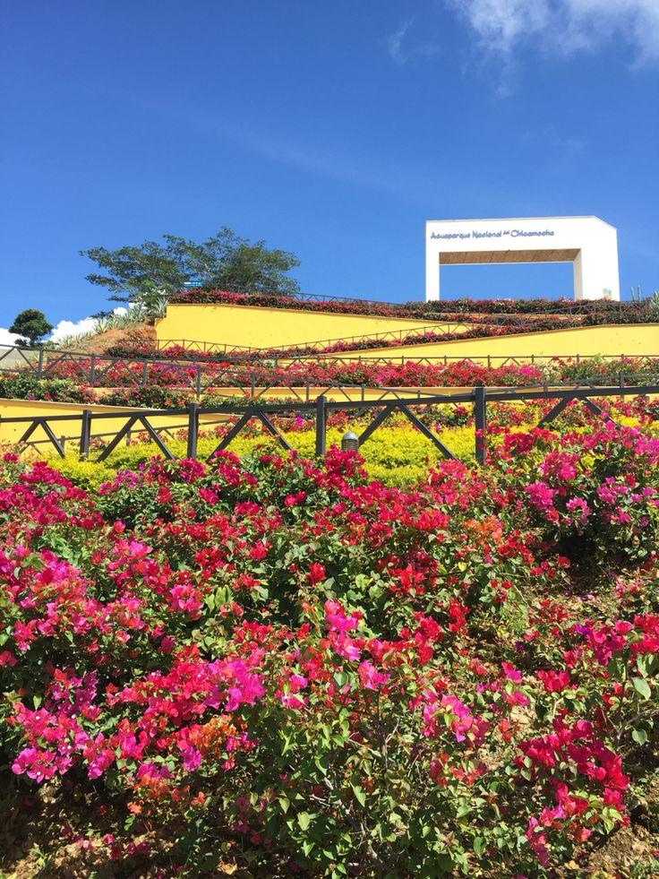 Flores.  Cañón del chicamocha. Santander, Colombia. By iPhone.