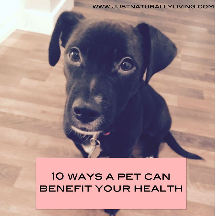 Trying to convince your significant other you need to get a dog? Take this list of 10 ways a pet can benefit your health to them. Bet they can't say no.