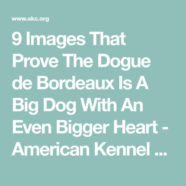 9 Images That Prove The Dogue de Bordeaux Is A Big Dog With An Even Bigger Heart - American Kennel Club