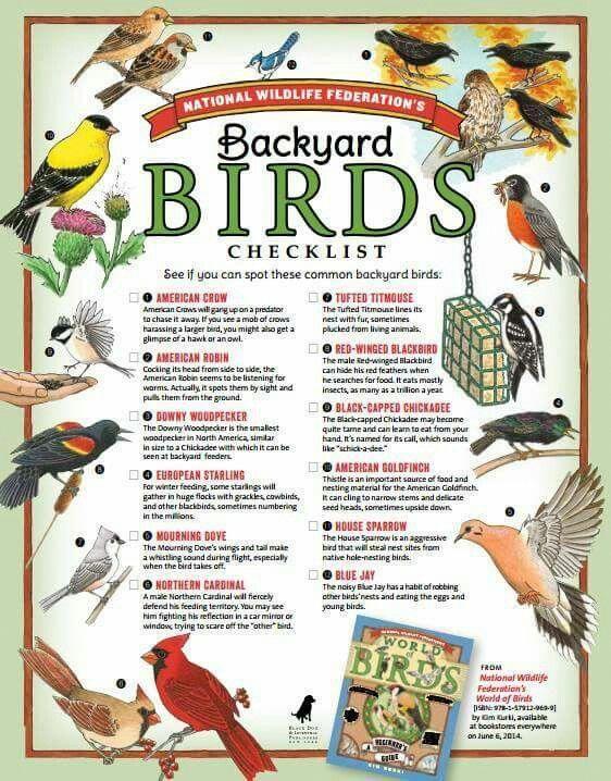 Bird Names | Creative Outdoor Fishing | Fun activities, Outdoor