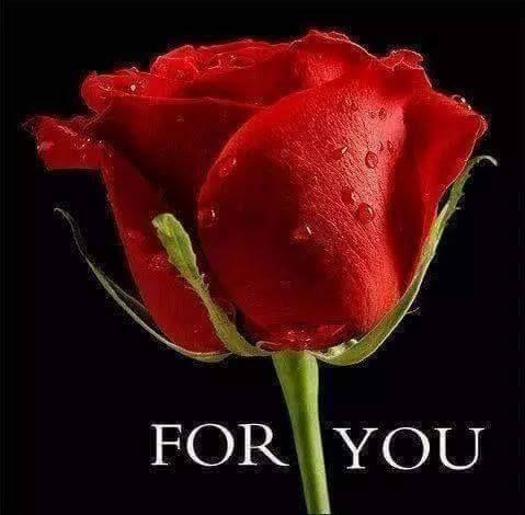 Rúža.