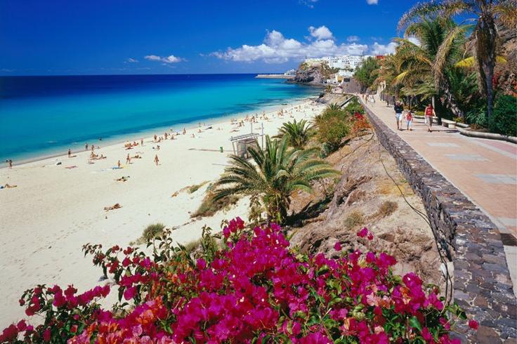 Fuerteventura- flowers on the beach are so pretty!